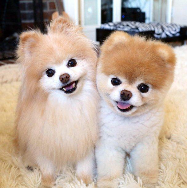 Buddy (izquierda) y Boo (derecha) eran mejores amigos<br>