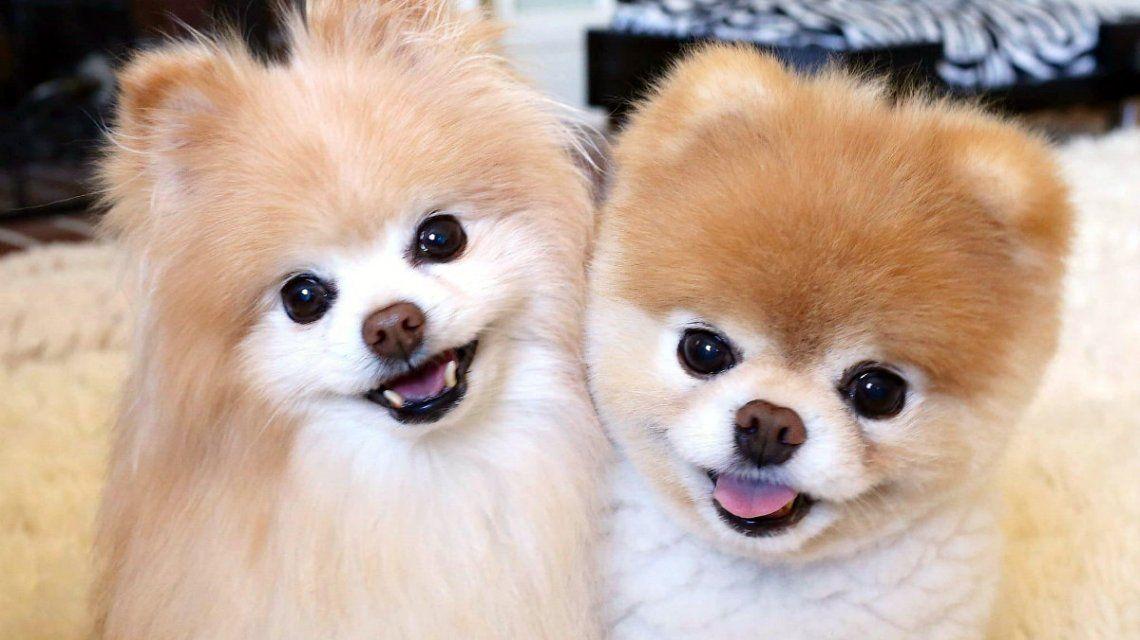 Buddy (izquierda) y Boo (derecha) eran mejores amigos