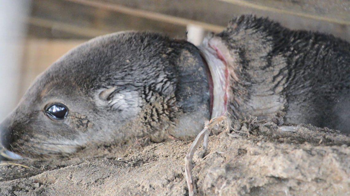 Más del 90% de los animales de la Costa asistidos tuvo lesiones causadas por el hombre