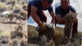 ¡Qué gratificante ayudar al que lo necesita!: salvó a un zorro de morir asfixiado