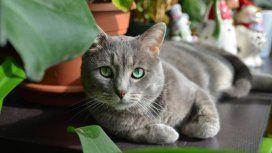 Revelador: los gatos reconocen su nombre y no obedecen a propósito