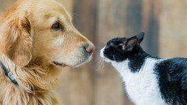 ¿Por qué se celebra hoy el Día del Animal en Argentina?