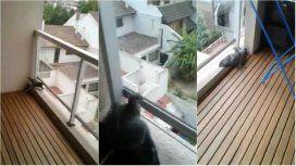 El rescate de una paloma atrapada en un balcón que se volvió viral: terminó muy mal