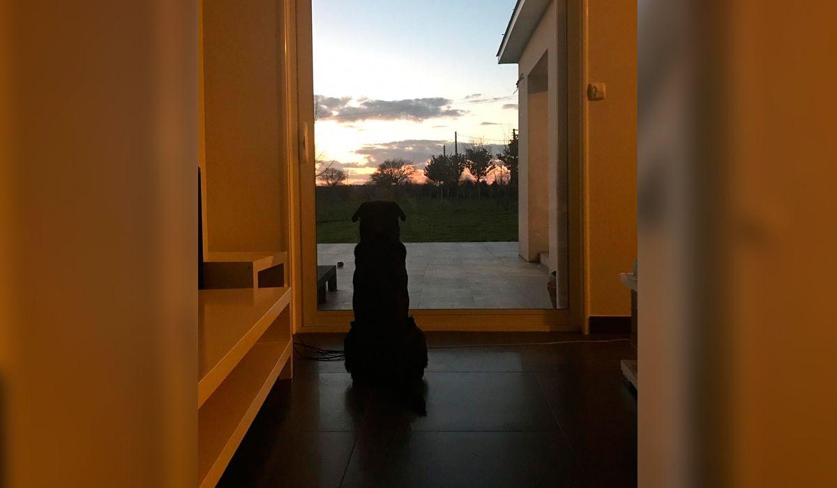 Nala, la perra de Emiliano Sala, espera la vuelta del futbolista argentino