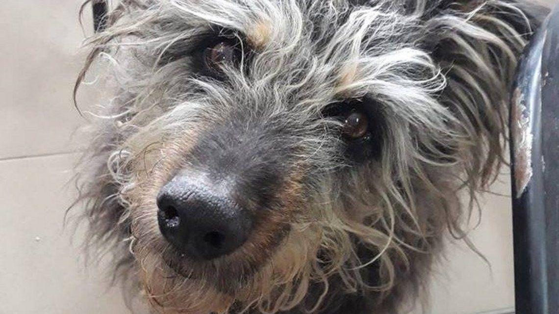Una multitud se reunió para darle el último adiós al perro más querido en Bahía Blanca