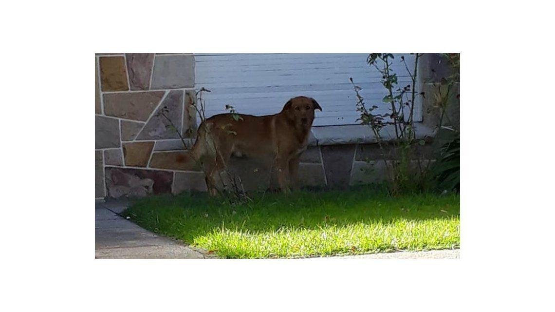Se mudaron a Corrientes y dejaron a su perro abandonado en una casa vacía