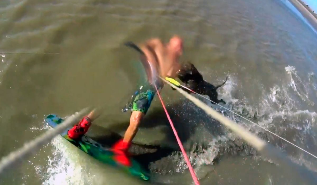 Punta Rasa: un pitbull atacó a un kitesurfista