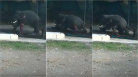 VIDEO: Bañaba a un elefante