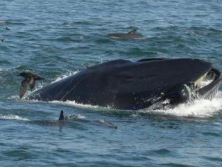 sudafrica: una ballena se trago a un fotografo y despues lo devolvio vivo