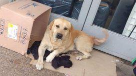 Conmovedor: un perro espera en la puerta del hospital a su dueño muerto