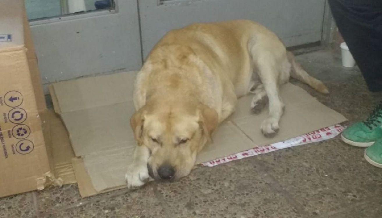 Jujuy: un perro espera en la puerta del hospital a su dueño muerto