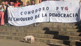 Comodoro PYG: protestaron con un chancho contra la corrupción en los tribunales