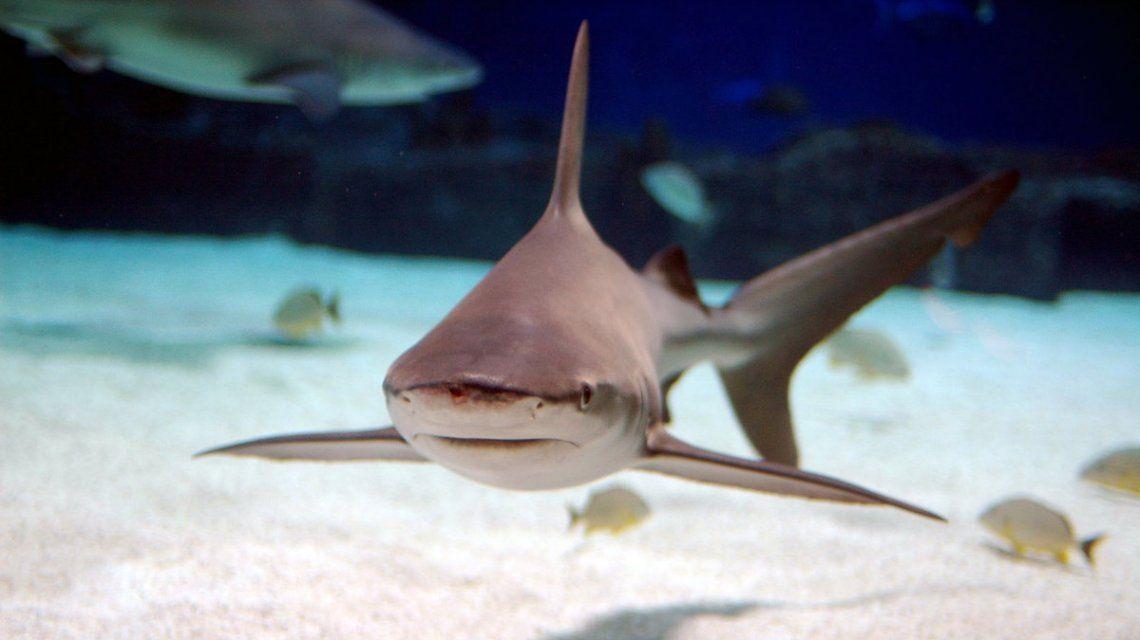 Los arrestaron por tener siete tiburones robados en la pileta de su casa