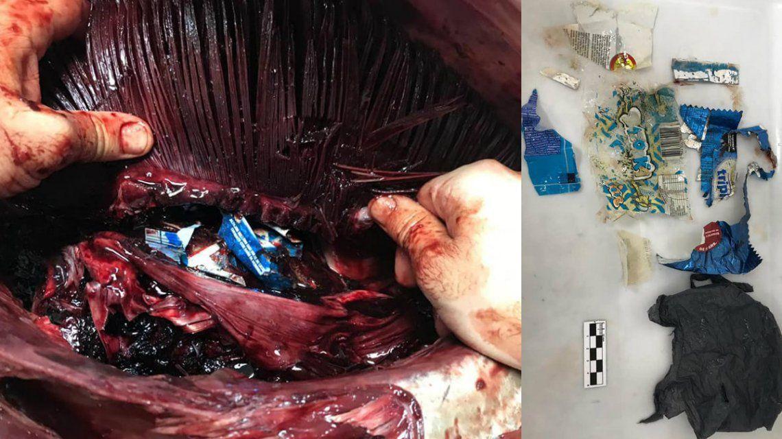 Encuentran un atún azul muerto en la playa: tenía plástico en su interior