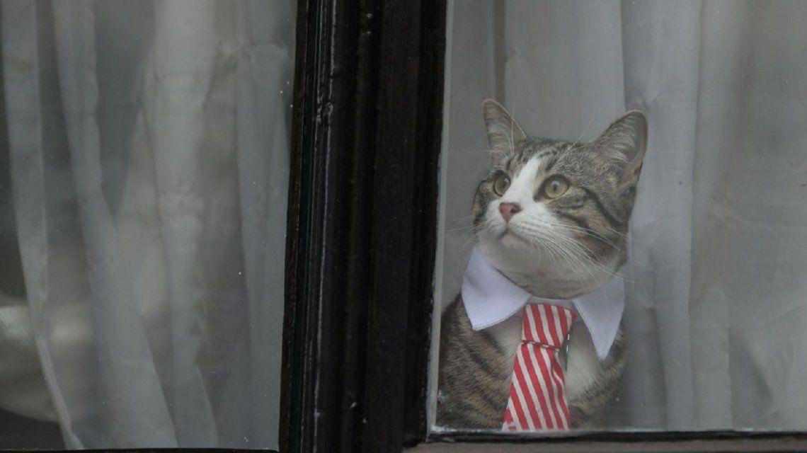 El gato de Julian Assange se fue de la Embajada de Ecuador antes de su arresto
