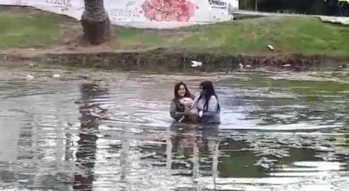 Dos mujeres rescataron a un perro que se ahogaba en La Plata