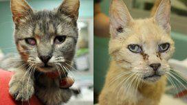Rescataron a 88 gatos