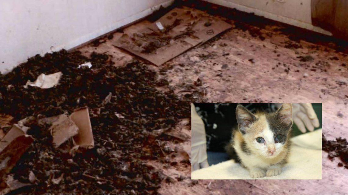 Rescataron a 88 gatos, un perro y un pez que estaban hacinados en la casa de una mujer