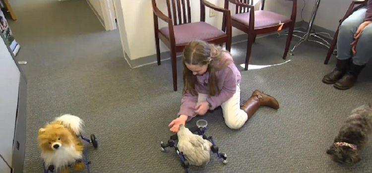 Se rieron de su gallina en silla de ruedas y ella salió a defenderla en televisión
