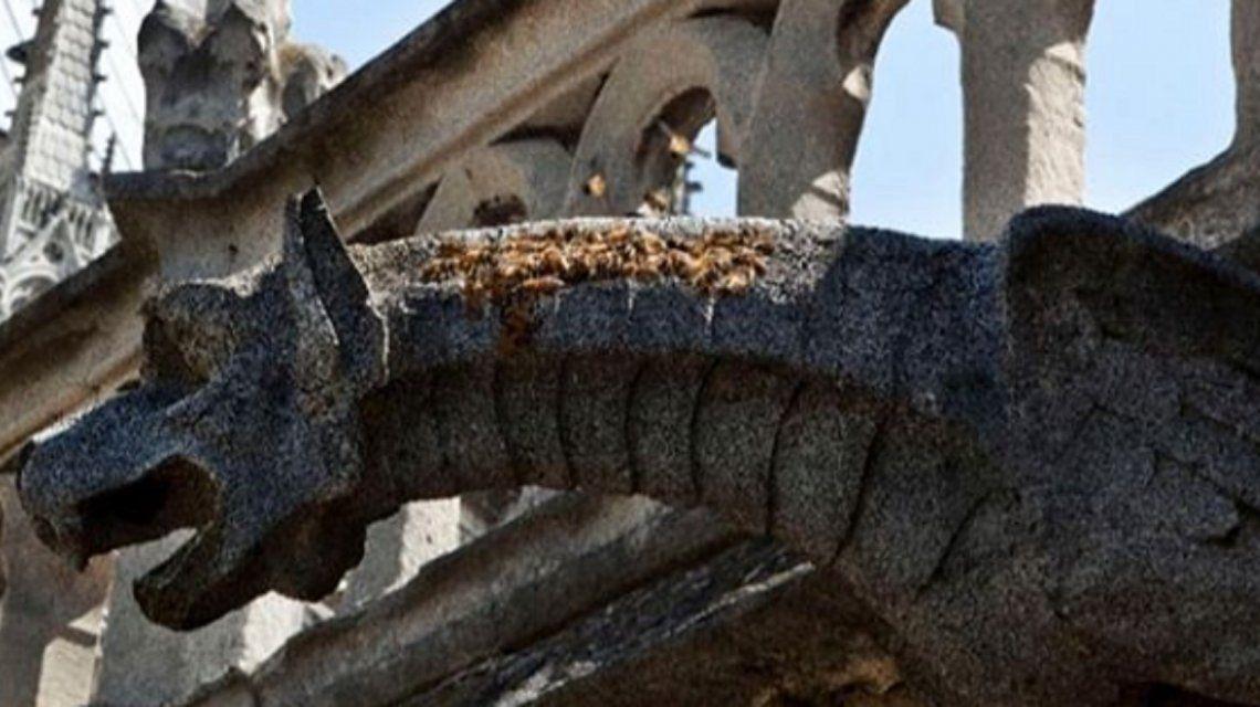 Notre Dame: revelan por qué miles de abejas sobrevivieron al incendio de manera milagrosa