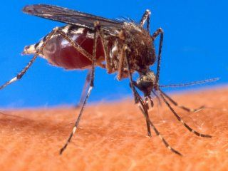 confirmaron 680 casos de dengue en salta