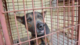 Un perro mordió a una mujer y su dueño beberá indemnizarla. Foto: Los Andes.