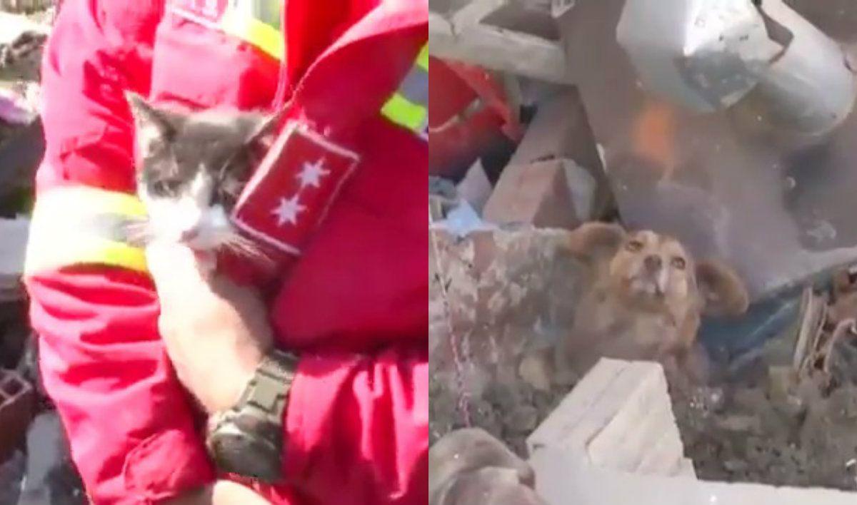 VIDEO: Así rescataron a más de 60 mascotas tras un derrumbe de tierra en Bolivia