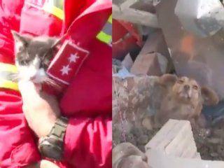 video: asi rescataron a mas de 60 mascotas tras un derrumbe de tierra en bolivia