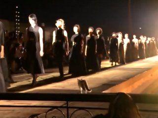 video: un gato con estilo se metio en un desfile de moda y orino a una espectadora