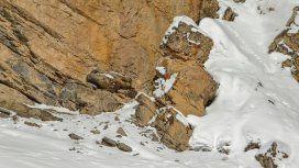 El leopardo en la nieve