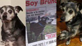 Ofrecen 20 mil pesos de recompensa por encontrar a Bruno, el perro del pueblo