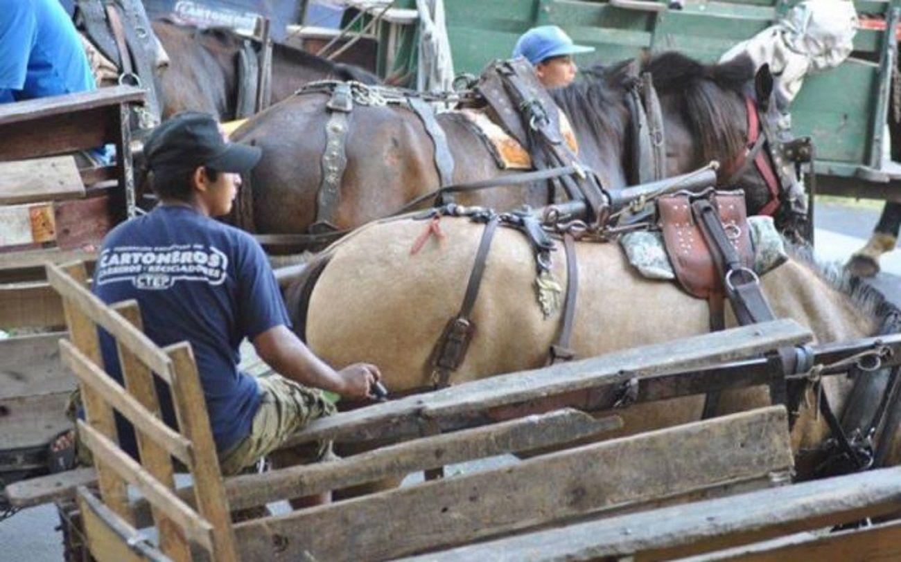Maltrato animal: la Justicia ordenó suspender la ordenanza que prohibe la tracción a sangre en Berazategui