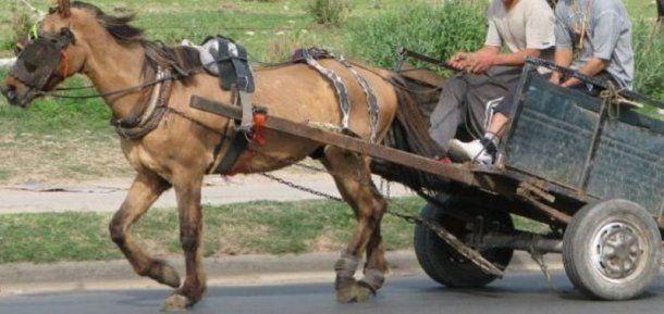 Los carreros utilizan ruedas de autos desinfladas para sus carros, que tienen un peso de tres veces más que lo que puede soportar este animal. <br>