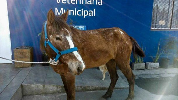 En Berazategui funciona una veterinaria municial. <br>