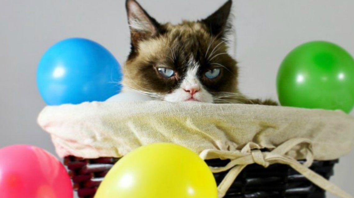 Murió Grumpy, la gata más famosa de Internet