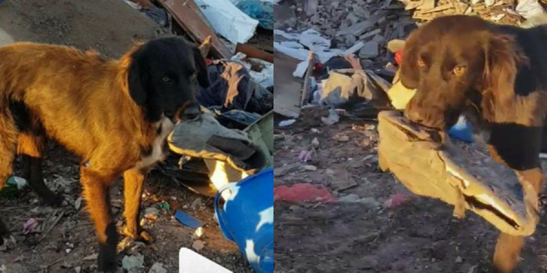 Un perrito espera ser rescatado de un basural y todo lo que pide es jugar con una zapatilla