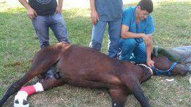 Los voluntarios de Mi reino por un caballo, asistiendo a una yegua luego de ser operada.