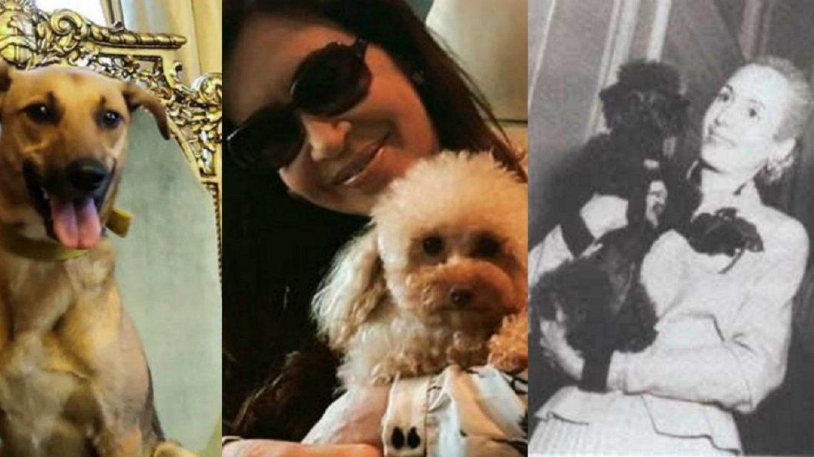 De Tinolia y Monito a Balcarce, Simón y Dylan: en su día, estos son los perros del poder
