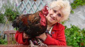 Problemas de primer mundo: Francia enjuicia a un gallo por cantar demasiado temprano