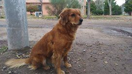 Detuvieron a su dueño y hace un año su perrita lo espera afuera de la comisaría