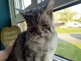¿el sucesor de grumpy cat? es el gato mas triste de la web pero tiene a todos enamorados