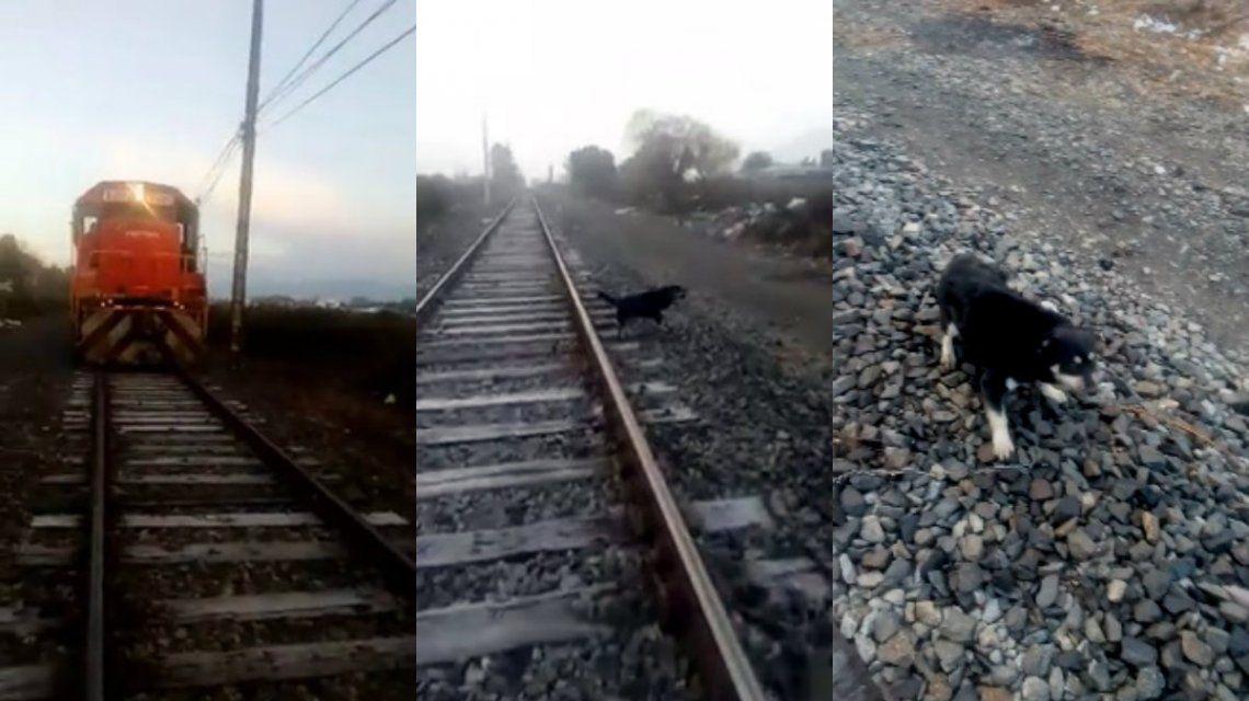 Encadenaron a un perro a la vía para que lo atropellara el tren: lo salvó un maquinista