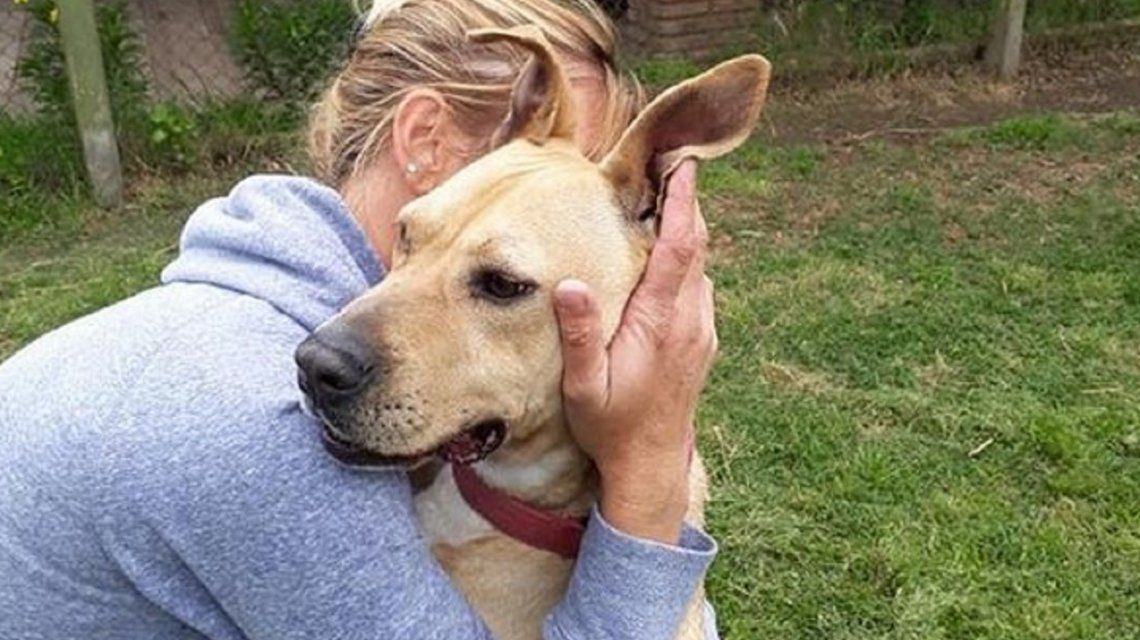 Lautaro se lleva genial con humanos pero no tanto con otros perros. Piden una adopción con mimos para él solo.