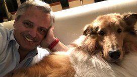 Dylan, el perro instagramer de Alberto Fernández, tuvo cachorritos