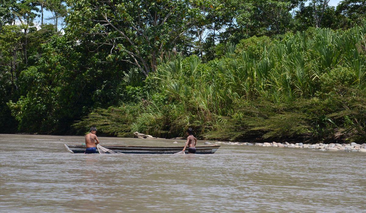 Brasil sigue arrasando la Amazonia: en un año, creció 60% la deforestación
