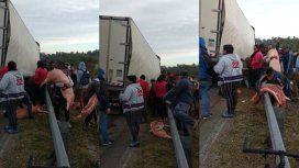 Saquearon un camión con carne de cerdo en plena ruta en Santa Fe