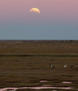 Así se vio el eclipse parcial de luna en Río Gallegos.