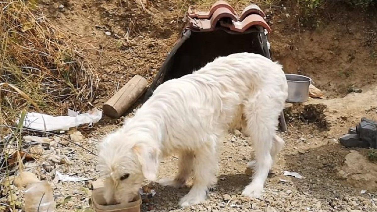 Un perro vive hace un año y medio en el lugar donde murió el dueño en un choque