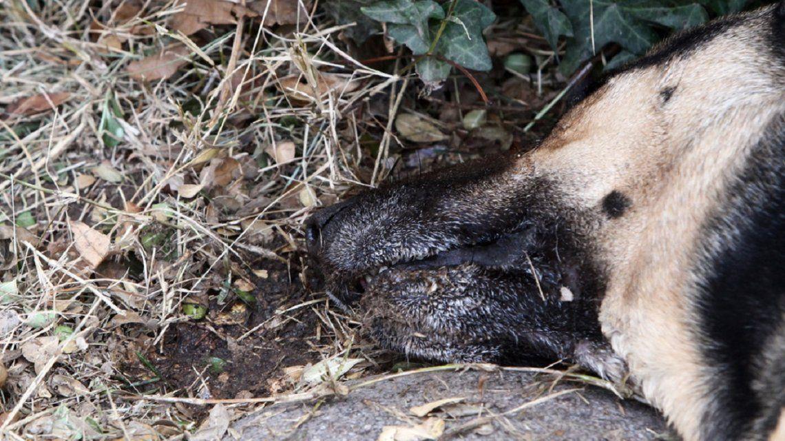 Conmoción en Mendoza por la matanza de al menos 20 perros
