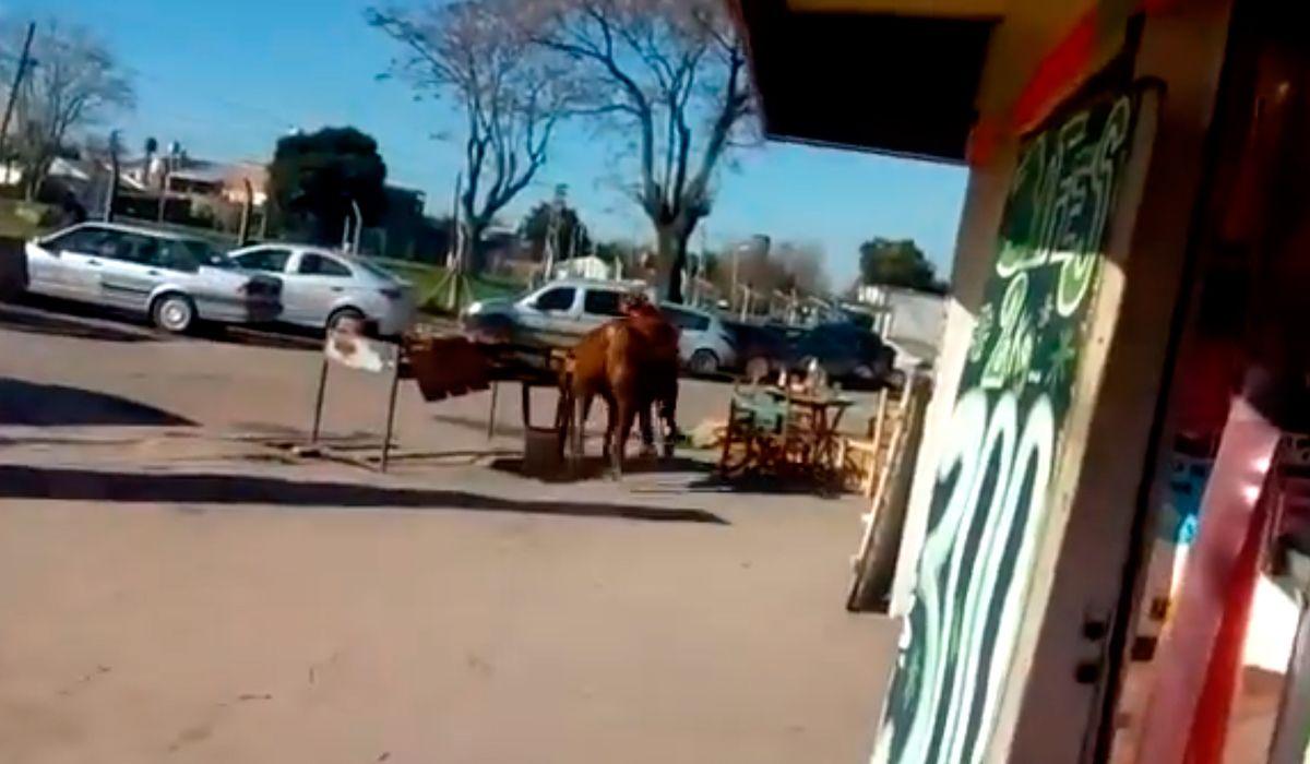 Un toro se escapó del matadero y atacó a la empleada de una parrilla